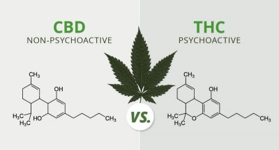 the-difference-between-CBD-and-THC-ballpark-dispensary-20170517-blog