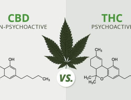 CBD vs. THC E Liquid Comparison: Here's Everything You Must Know First