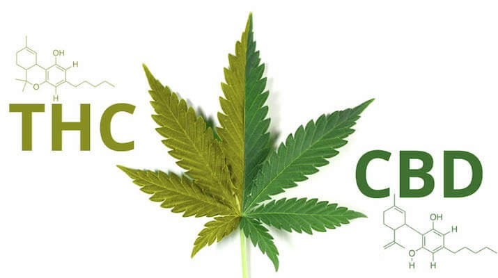 Two important compounds in marijuana plant